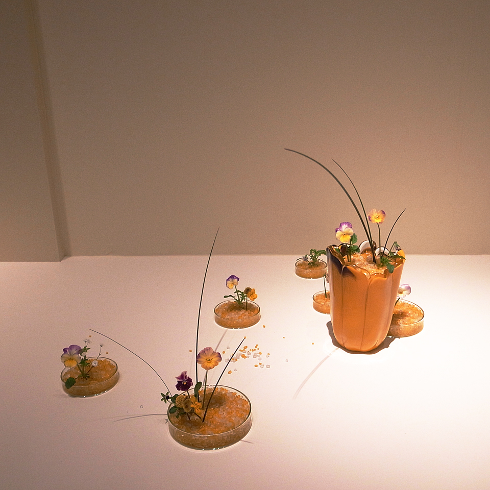 自由花 ビオラ、スチールグラス、ゴールデンスティック、かすみ草
