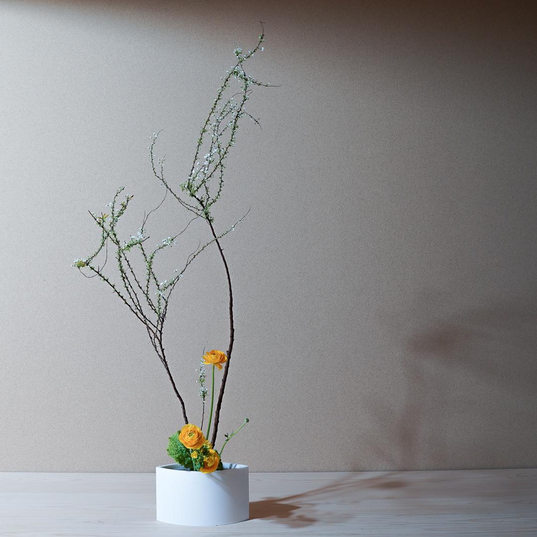 自由花 雪柳、ラナンキュラス、菜の花