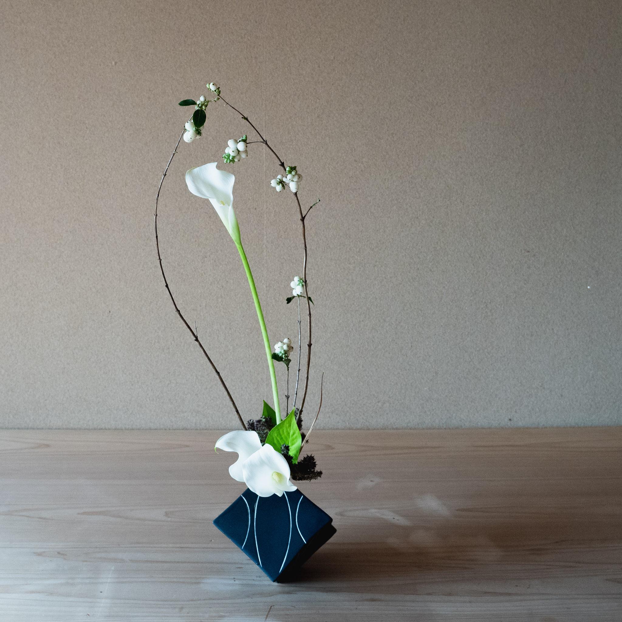 自由花 シンフォリカルポス、カラー、ライムポトスなど